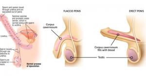 ejaculaçao-precoce